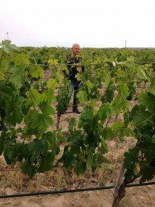 Kappa vineyard