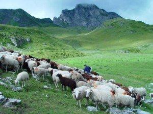 Schafherde Pyrenäen