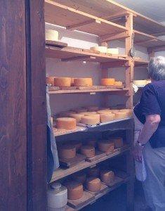 Brac cheesemaker in cellar