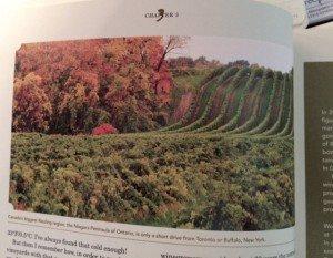 Best White Wine on Earth - Niagara